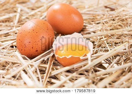 Chicken eggs in the straw with half a broken raw egg