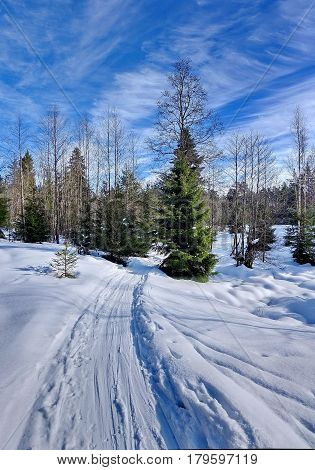 Snowy road and fir trees heavily covered with fresh snow against the blue sky and clouds. Subpolar Urals, Russia