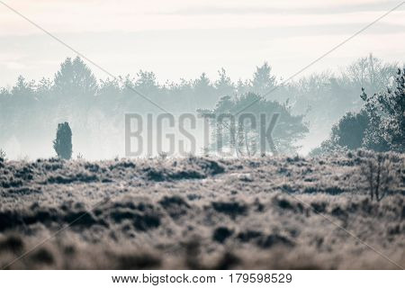 Moorland with trees in a misty valley.
