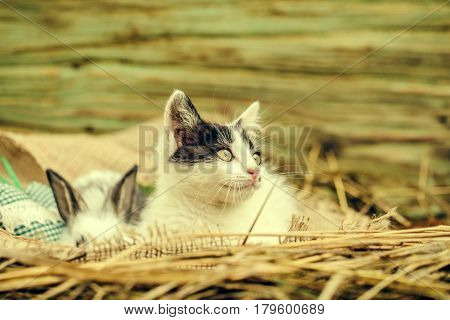 Cute Small Cat And Little Rabbit Sitting On Sackcloth