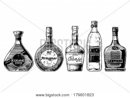 Vector hand drawn illustration set of different brandies types. Cognac armagnac calvados Grappa and brandy. on white background