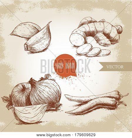 Hand drawn sketch style illustration of different spices. Cloves of garlic ginger root onions and chili peppers.
