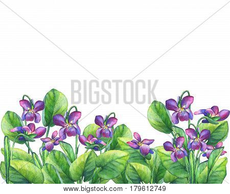 Flower frame of the Fragrant violets (English Sweet Violets, Viola odorata). Hand drawn watercolor painting on white background.