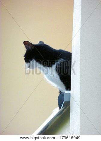 Photo of a black and white cat standing on the ledge