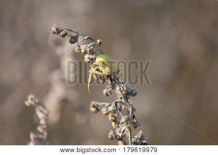 The spider eats an ant Rostov-on-Don Russia September 14 2011
