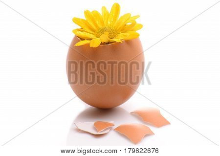 flower in eggshell isolated on white background. Development, care, hope, ecology, new life, birth or revival concept.