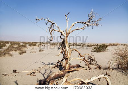A dead tree in the Death Valley desert, California