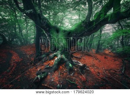 Scary Tree. Mystical Dark Foggy Forest