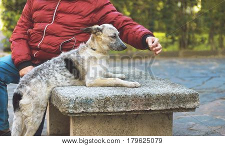 Puppy black and white half-blood dog stretches behind the stern in the hand of a seated man on a bench in the city park