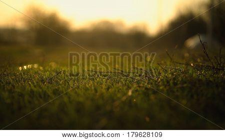 A beautyful macro shot of green grass