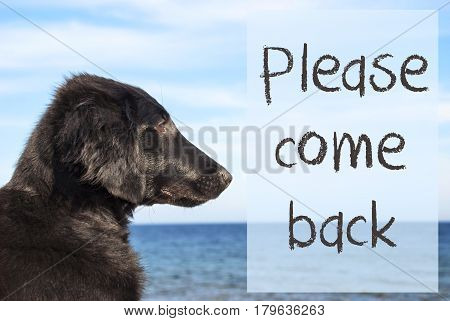 English Text Please Come Back. Flat Coated Retriever Dog Infront Of Ocean. Water In The Background