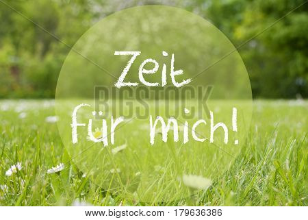 German Text Zeit Fuer Mich Means Time For Me. Spring Or Summer Gras Meadow With Daisy Flowers. Blurry Trees As Background.