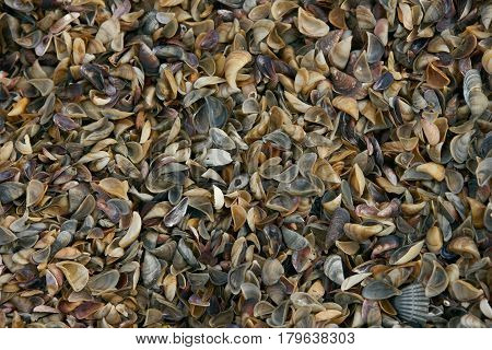 Close-up of Different colorful seashells. Seashell background. Texture of colorful seashells.