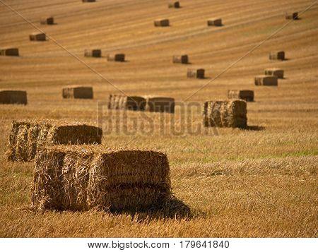 Straw Bales Background