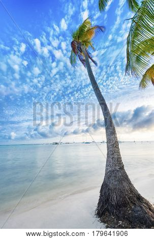 Single palm tree at Anse Champagne beach in Saint Francois, Guadeloupe, Caribbean