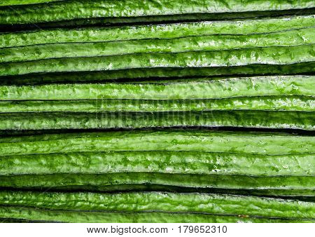 Texture of Angled loofah freshness green vegetable