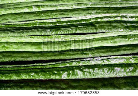 Texture of Angled loofah , Green vegetable