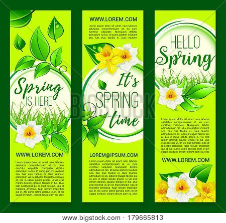 Hello Spring vector banners set with blooming daffodils and narcissus blossoms. Springtime holiday design of flowers bunch bouquets with green grass and leaves on sunny meadow lawn