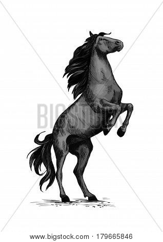 Horse on rears. Wild black mustang racer or stallion trotter rearing. Vector symbol for equine sport races or rides. Racehorse mustang for equestrian sport horserace contest or exhibition poster