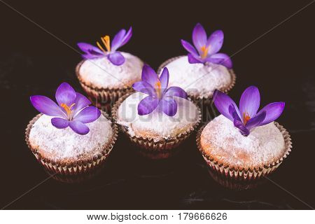 Muffins Decorated With Crocus Flower On Black Velvet  Background...spring. Close Up.