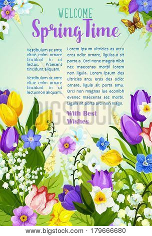 Spring Time vector poster with greetings and blooming springtime flowers on sunny meadow. Welcome spring season quote with floral design of crocuses, tulips and lily blossoms, narcissus or daffodils