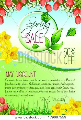 Spring Sale vector poster for May springtime holiday discount offer and shopping. Floral design of tulips bouquets and blooming daffodils narcissus bunches on spring grass meadow or sunny field
