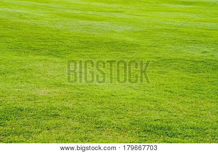 background lawn colorful green at garden bright