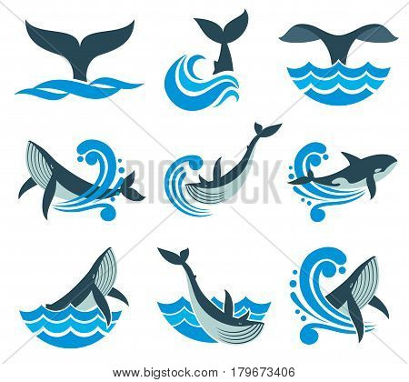 Wild whale in sea waves and water splashes vector icons. Animal wildlife whale in blue sea, illustration of marine animal