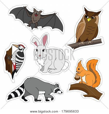 Set of various cute animals, forest animals. Woodpecker on a branch, owl, bat, Bunny, squirrel, raccoon. Vector illustration isolated on white.