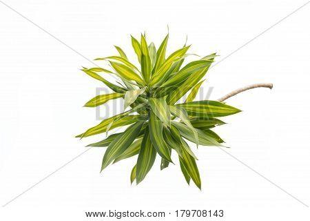 tree leaf isolated tree on white bacground tree object.