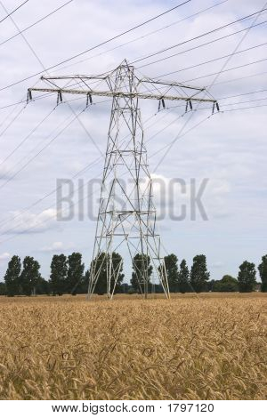 Power Pylon In Wheat