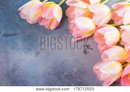 Pink and yellow tulips on gray stone background frame with copy space