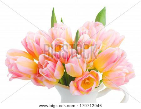 Posy of fresh pink and yellow tulips close up isolated on white background
