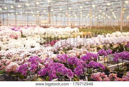 Orchid plants in a huge glass house