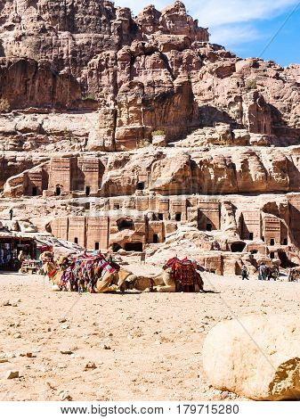 Bedouin Camels In Ancient Petra Town