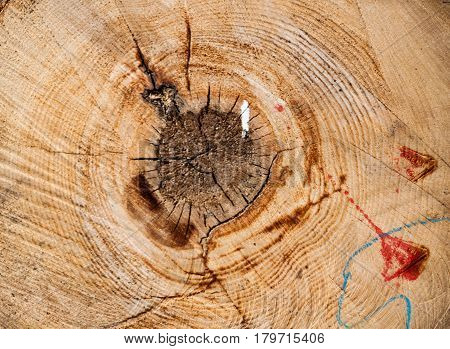 Wooden background, texture severed wood logs with nodes