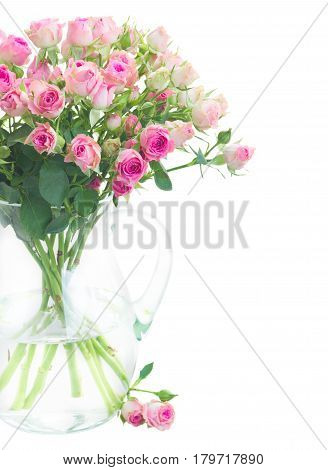 Bouquet of small pink wild roses in vase close up isolated on white background
