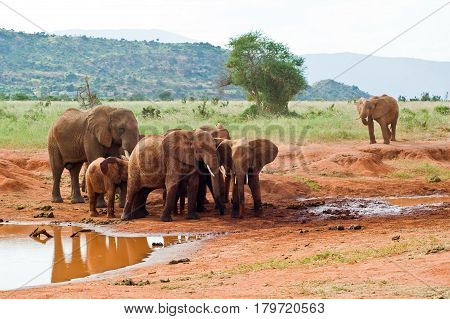 A family of elephants near a watering place.
