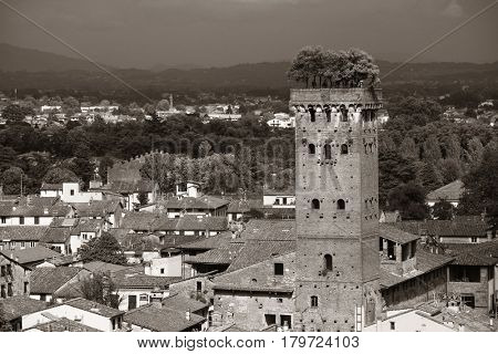 Lucca skyline with Guinigi Tower and cathedral in Italy