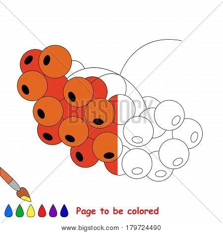 Red Rowan, Ashberry in vector to be traced, restore dashed line and color the picture, the simple visual game with easy education game level for preschool kids.