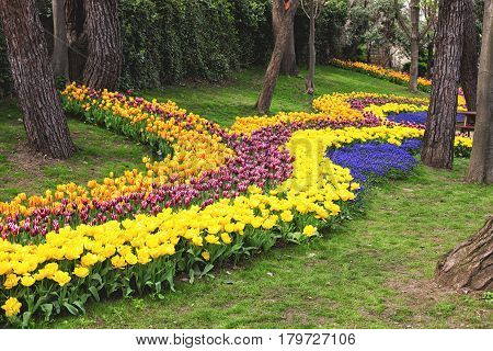 Colorful flower beds during the annual April tulip festival in Istanbul in Yildiz Park