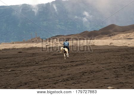 Horseback rider at midday riding his brown horse in the valley at the Tengger Semeru National Park in East Java Indonesia.