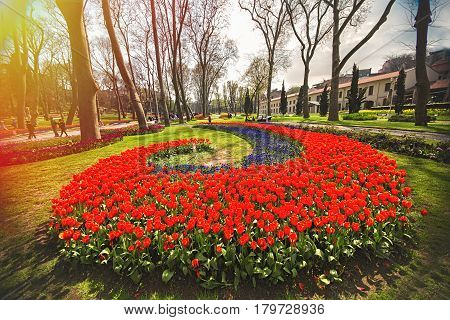 Colorful flower beds during the annual April tulip festival in Istanbul in Gulhane Park Turkey