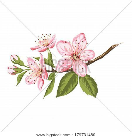 Spring branch of blooming sakura isolated on white background.Vector illustration.