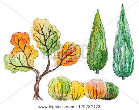Set of hand drawn watercolor pictorial green and orange trees and shrubs, isolated on the white background for your landscape design