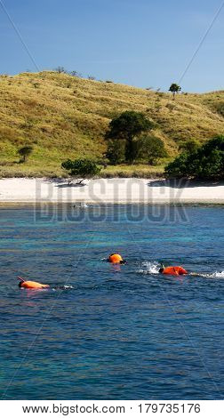 Group people snorkeling while swimming in blue water to see exotic fish under water wearing orange life jackets at midday and white sand beach at background