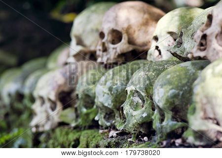 Cleaned skulls stacked under a banyan tree in the cemetery as per anciant Hindu Tradition in Trunyan, Bali, Indonesia
