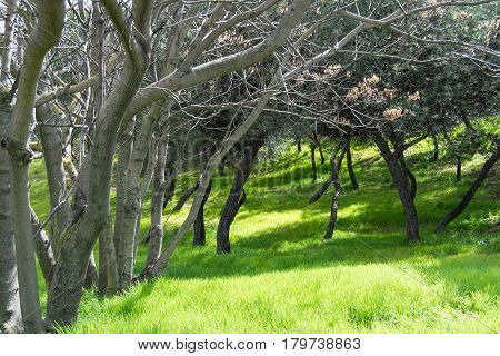 Green grass on the woods. Tranquil scene.
