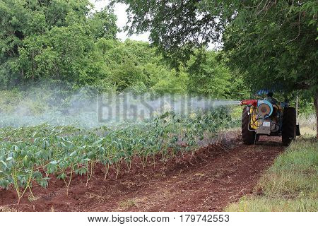 This picture is a cassava plantation in the western of Thailand