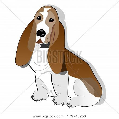 Basset hound isolated drawing on white background. ector EPS 10